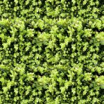 Greenery Wall Illustrated