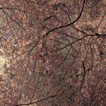 Patina Autumn Leaves Laminate Copper - Unique Art - NuMetal - #C421