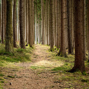 LumiSplash – LumiSplash Kit - Mystical Forest